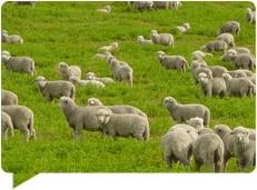 Potreby ovečiek